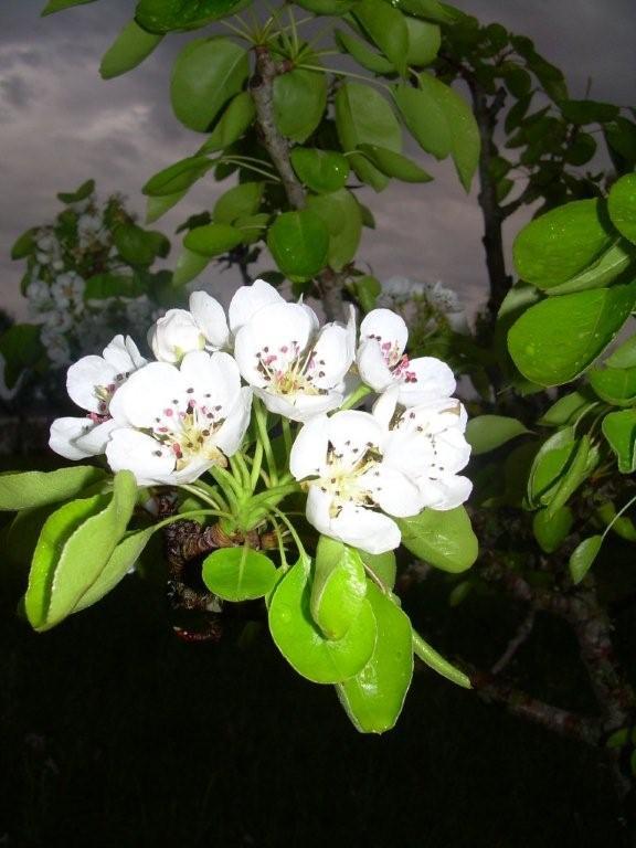 blossomsbymoon.jpg